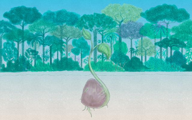 ilustración del brote de una semilla