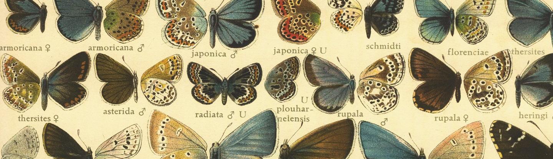 Un mundo de mariposas