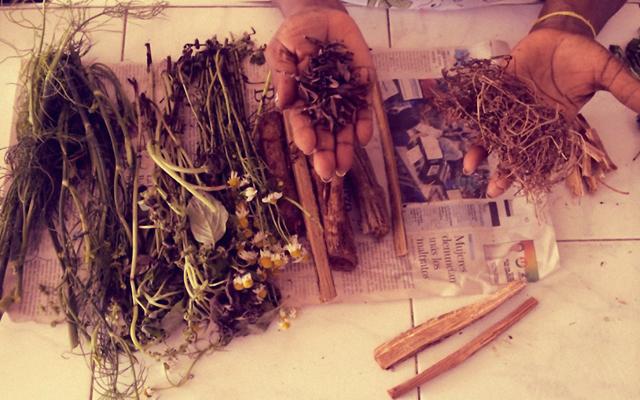 Plantas medicinales para la parteria